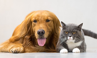 Why does your dog or cat have bad breath?