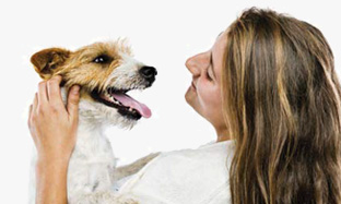 How to take care of your dog's teeth to avoid the appearance of tartar ?