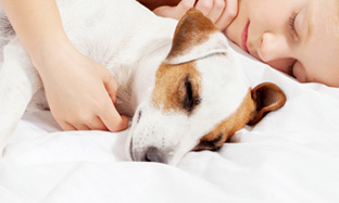 Skin diseases in dogs: how to treat your dog?