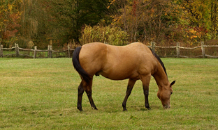 Horse pains: how to prevent your horse from suffering